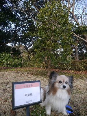 2013横須賀13