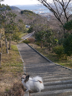 2013横須賀15