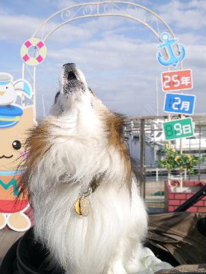 2013伊豆2−9
