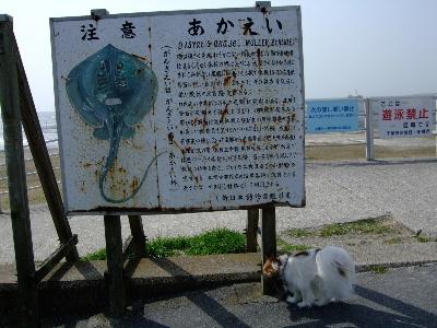 船橋三番瀬公園1.JPG