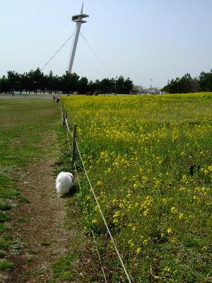 葛西臨海公園3.JPG