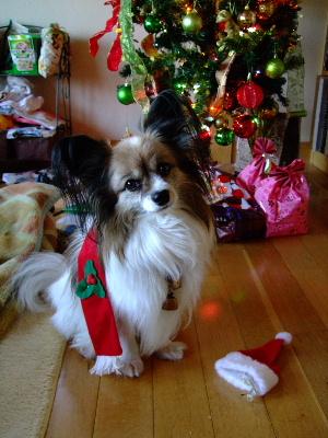 クリスマス2009-2.JPG