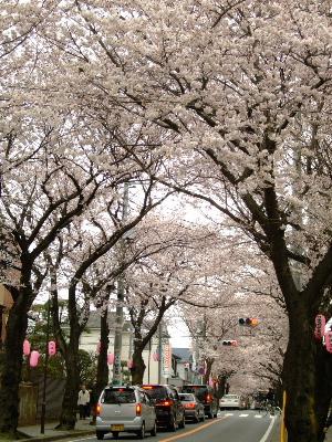 桜祭り1.JPG