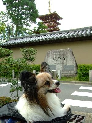 奈良2-17.JPG