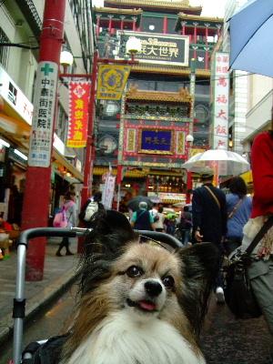 中華街8.JPG