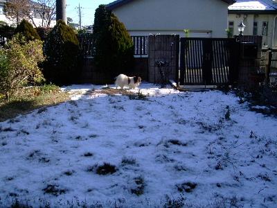 初雪1.JPG