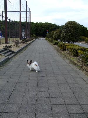 海浜幕張5.JPG