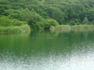 白樺湖・蓼科湖22.JPG