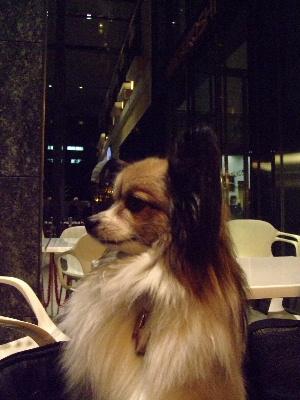 2011銀座11.JPG