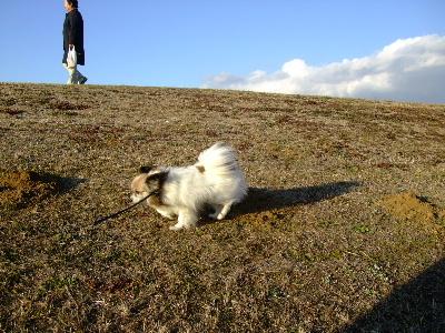2012初散歩4.JPG