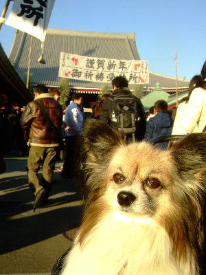 2012浅草6.JPG