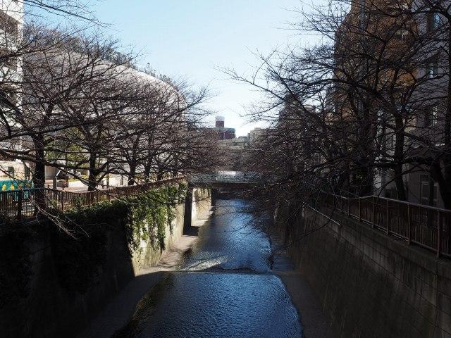 目黒川と大橋JCT。桜吹雪がまた見たい。