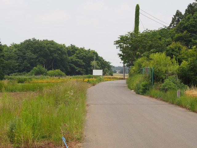 つくば市鍋沼新田の未買収地。事業認定の公示板が見えます。