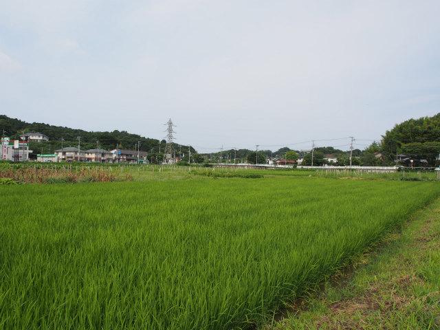 横浜湘南道路方面。