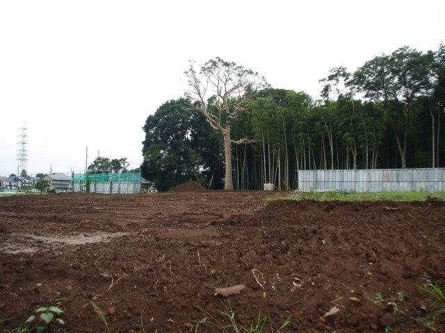 用地内から移植された大樹。