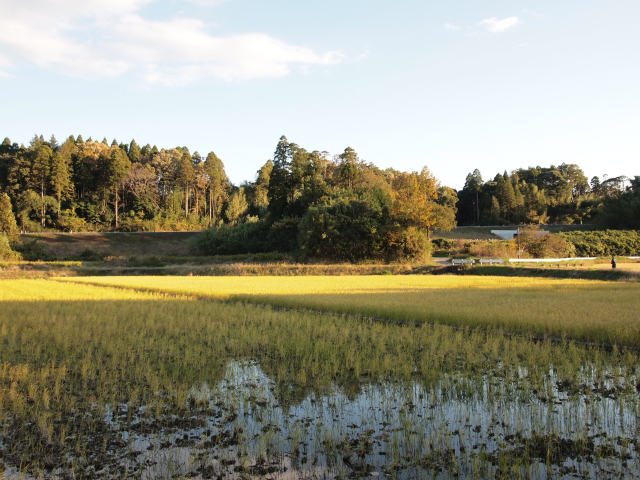 大網白里町の大竹付近。