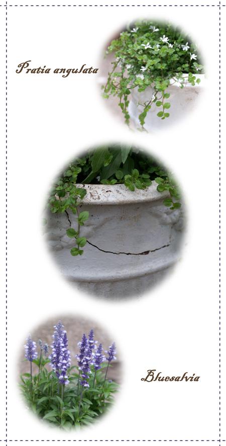 割れた鉢寄せ植えweb用