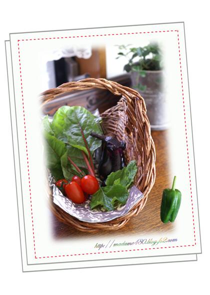 野菜収穫7月