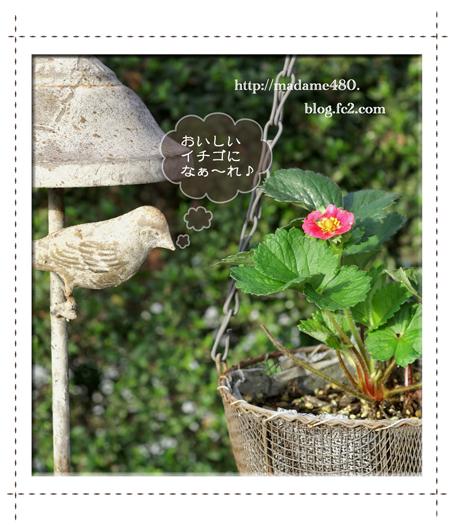 イチゴ&鳥web用