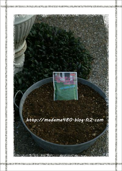 芝種まきweb用