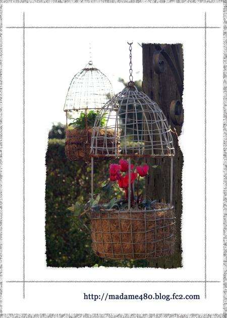 鳥かご+ビオラweb用c