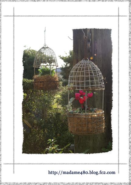 鳥かご+ビオラweb用ok