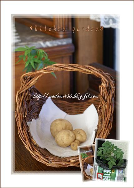 ジャガイモ収穫web用