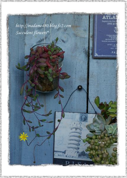 ルビーネックレスの花Aweb用