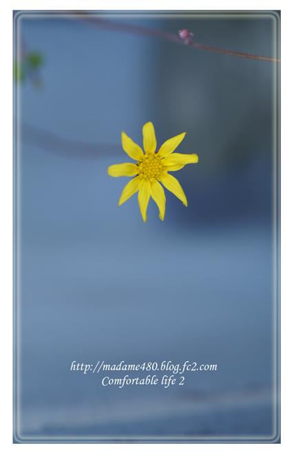 ルビーネックレスの花web用