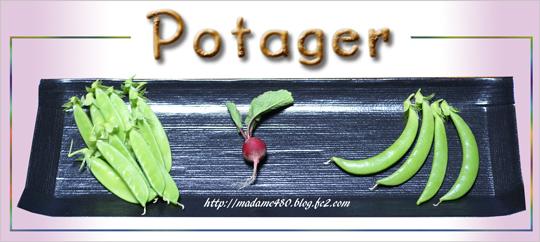 冬野菜の収穫web用ok