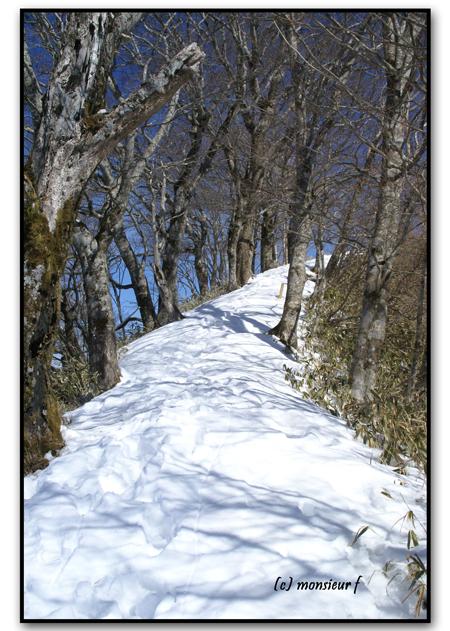 雪道と影web用