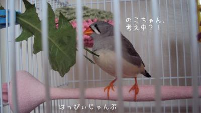 DSC01519_convert_20120904113503.jpg