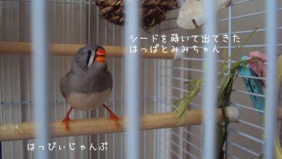 DSC01689_convert_20120906110308.jpg