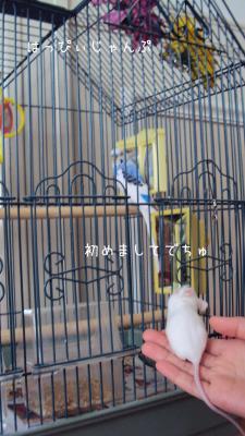 DSC01780_convert_20120907112510.jpg