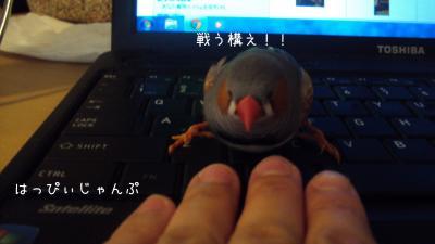 DSC02929_convert_20121005121920.jpg
