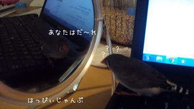 DSC02947_convert_20121005121902.jpg