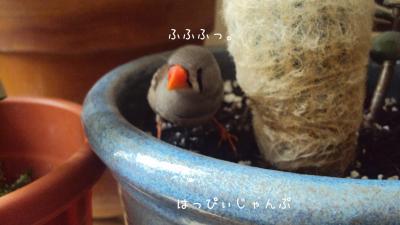 DSC03443_convert_20121016120419.jpg