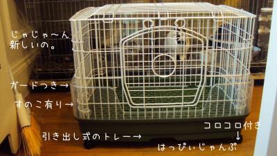 DSC05902_convert_20121222061415.jpg