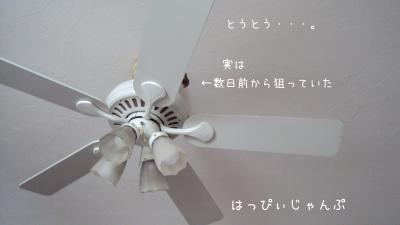 DSC09333_convert_20120724102840.jpg