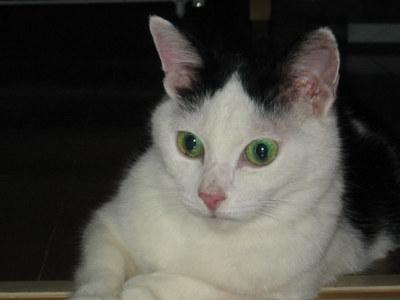 オジョー翡翠の目