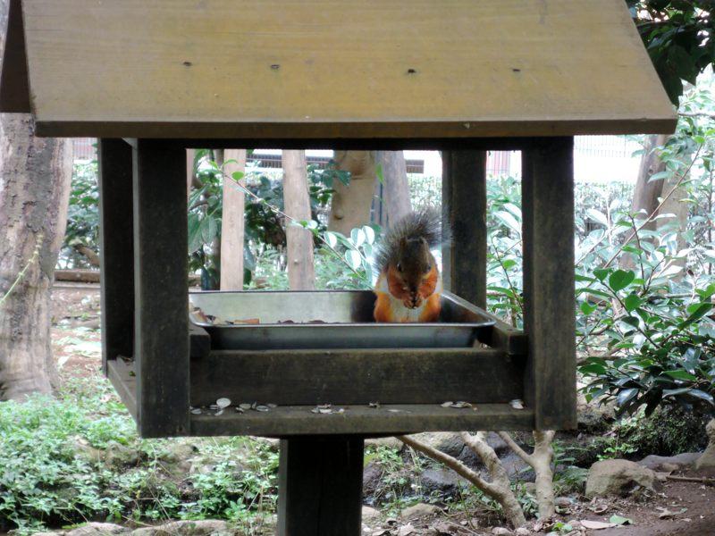 井の頭自然文化園 リスの小径の小屋の中で食事中のリスさん