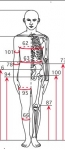 人体計測とサイズ