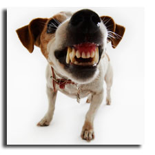 dogmouth.jpg