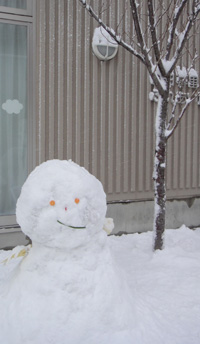 20年ぶりの大雪 2014年2月8日