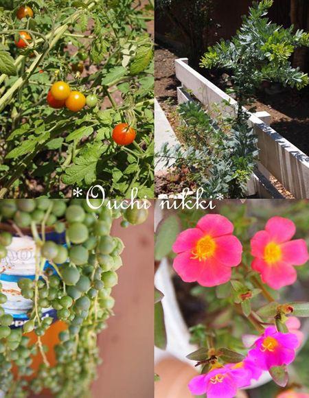 1夏の庭_R