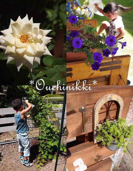 2夏の庭_R