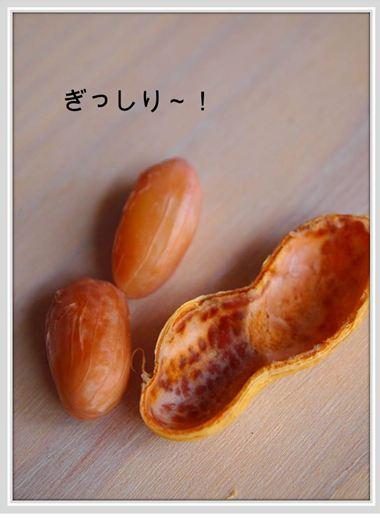 落花生2_R
