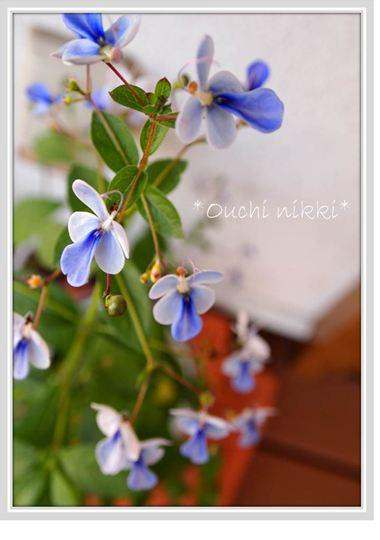 2012964_R.jpg