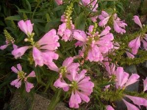 CIMG2266_convert_20120920103517.jpg