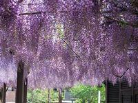 flower-fuji.jpg